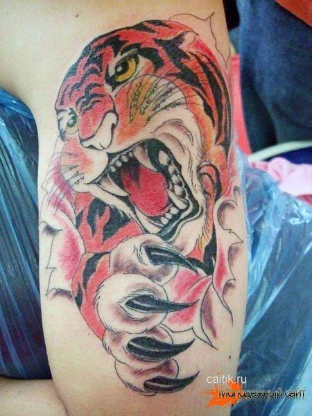 татуировка тигр с когтями