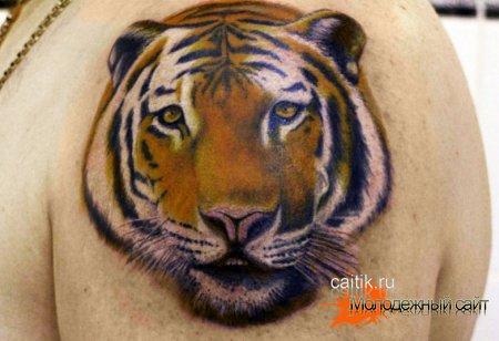 тигр на плече татуировка
