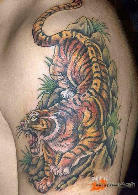 татуировка тигр на плече