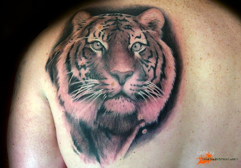 татуировка тигр картинки