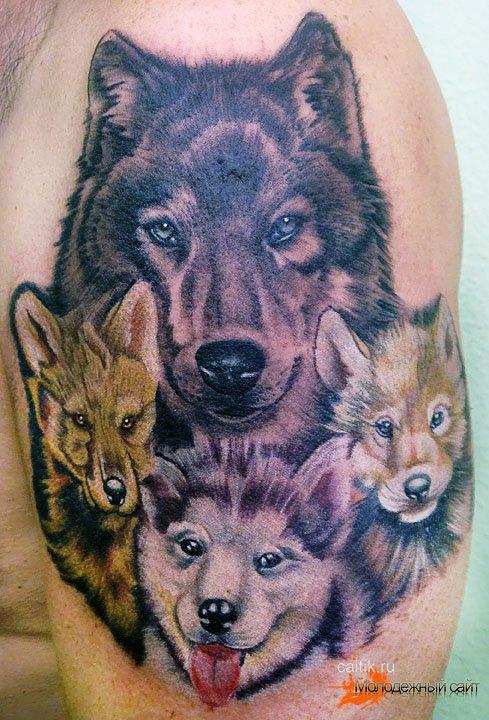 "Значение татуировки волчица. - Тату салон ""Тортуга"" 24 часа"