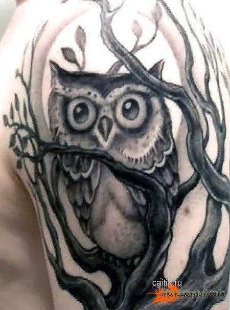 сова в ветках татуировка