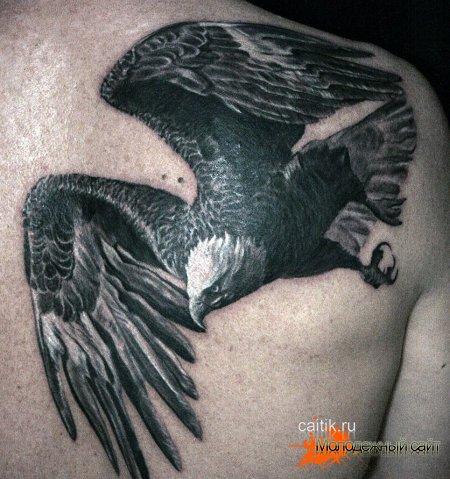 черно-белая татуировка парящий орел на спине