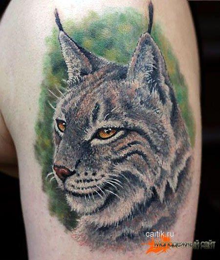 Feral cat box tattoo