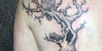 татуировка дерево с совою