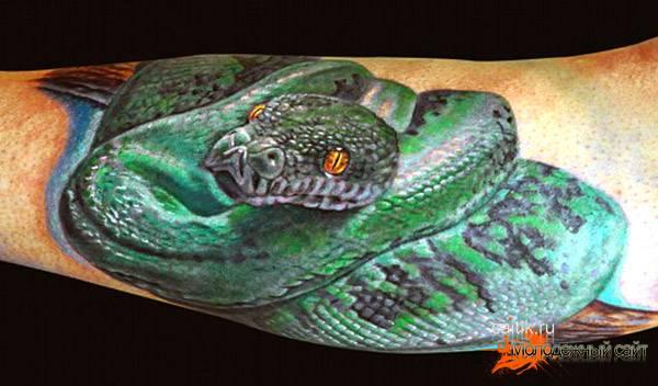 зеленый питон татуировка