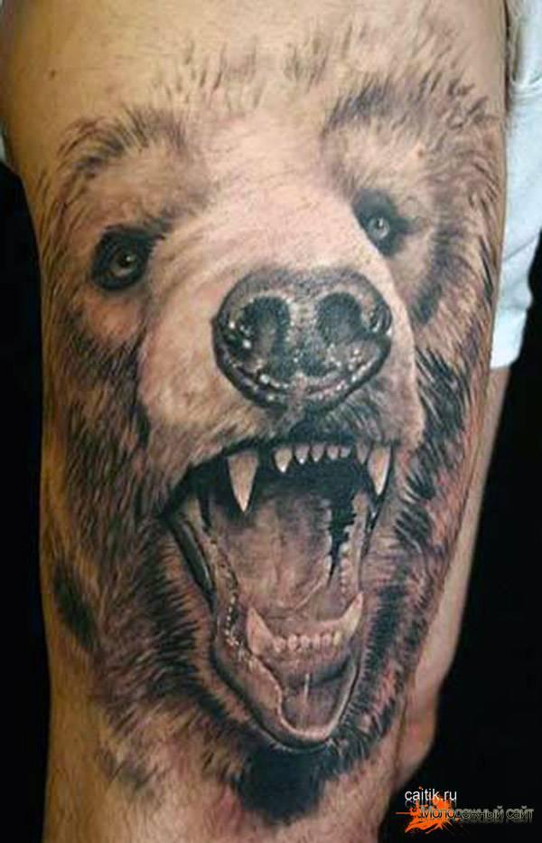 медведь с оскалом