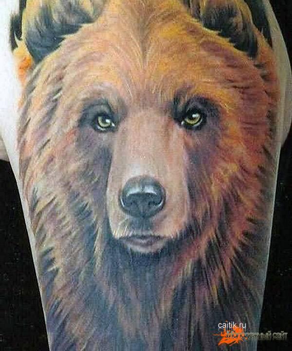 хозяин леса медведь
