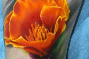 большой цветок мака